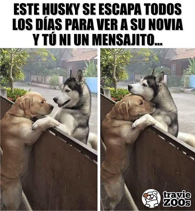 Relationship Goals Goals Perros Amor Pareja Romance Love Perros Graciosos Amor De Perro Memes Perros