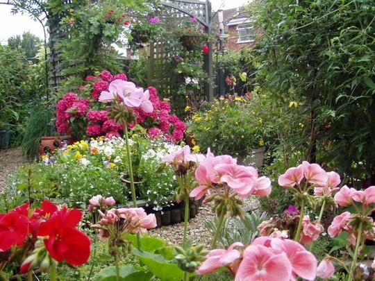 Les 2927 meilleures images propos de jardins et fleurs sur pinterest fleurs jardins et - Beau jardin rose and geranium ...