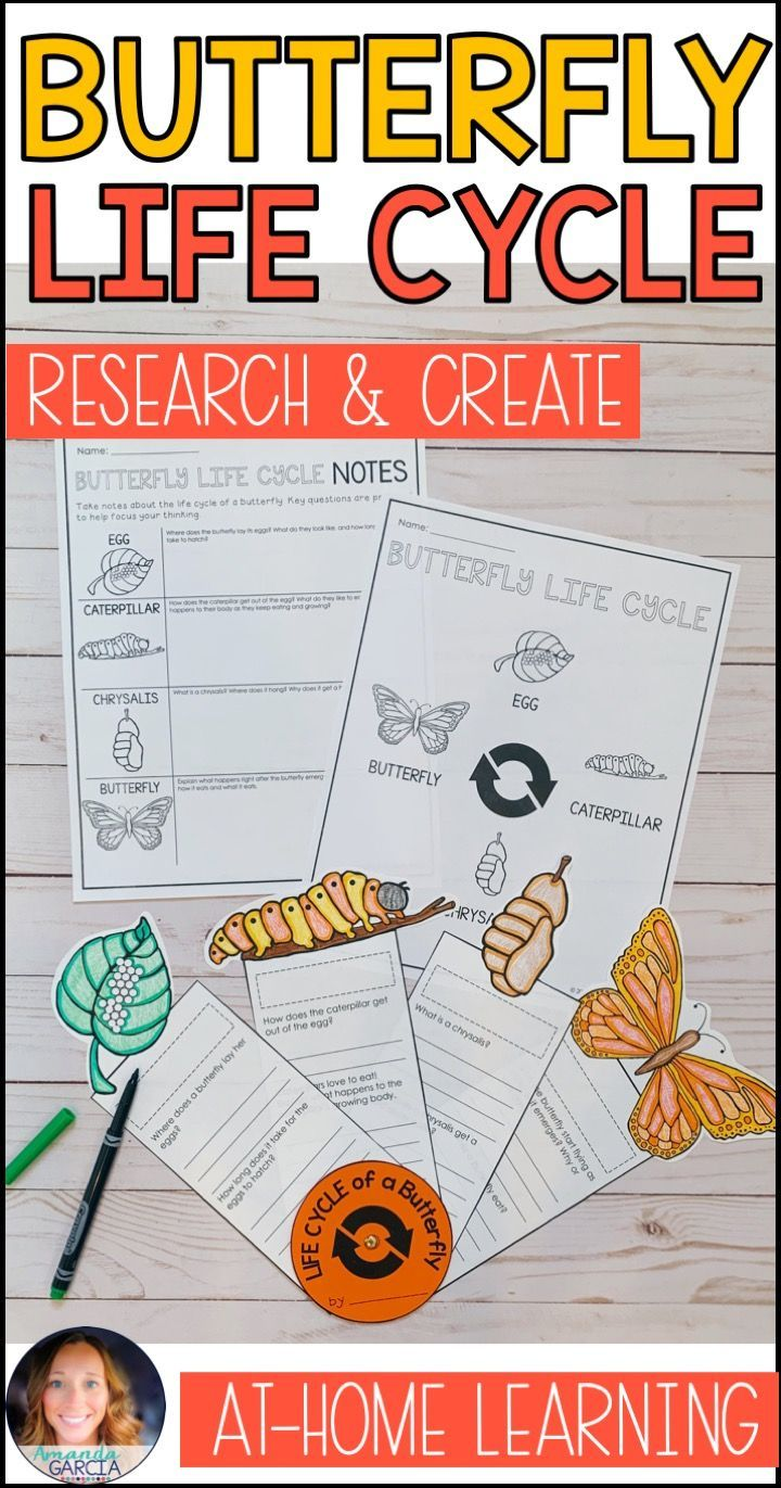 Predownload: Butterfly Life Cycle At Home Learning Life Cycles Butterfly Life Cycle Project Butterfly Life Cycle [ 1371 x 720 Pixel ]