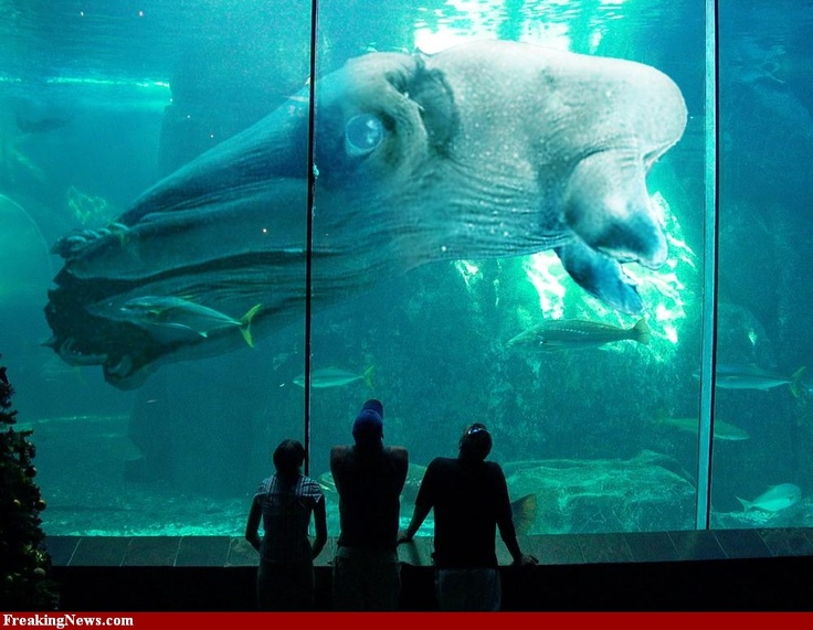 43+ Big Animals That Live In The Ocean