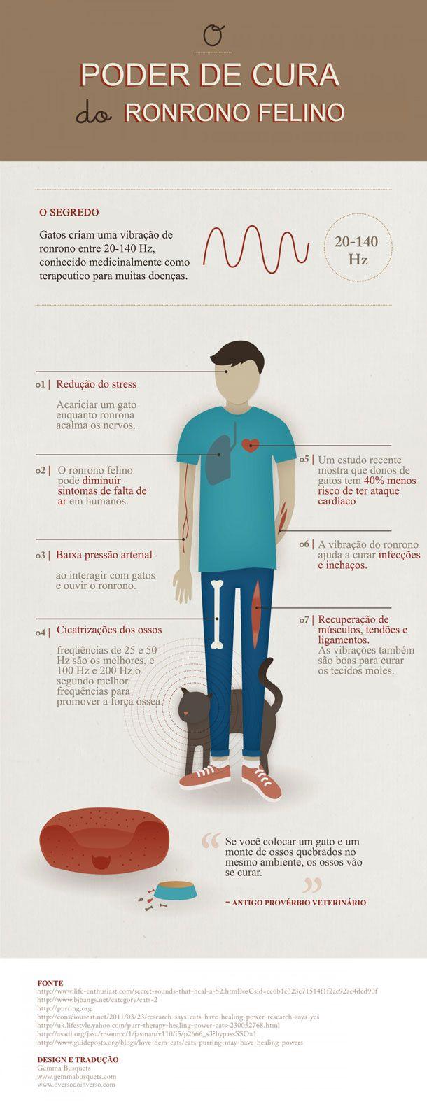 As maneiras brilhantes que gatos estão secretamente ajudando seus donos a serem mais saudáveis - Awebic