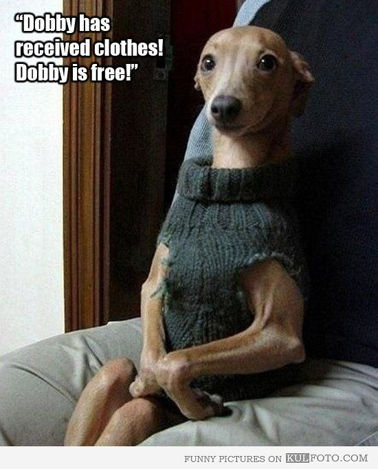 Pets that look like Dobby