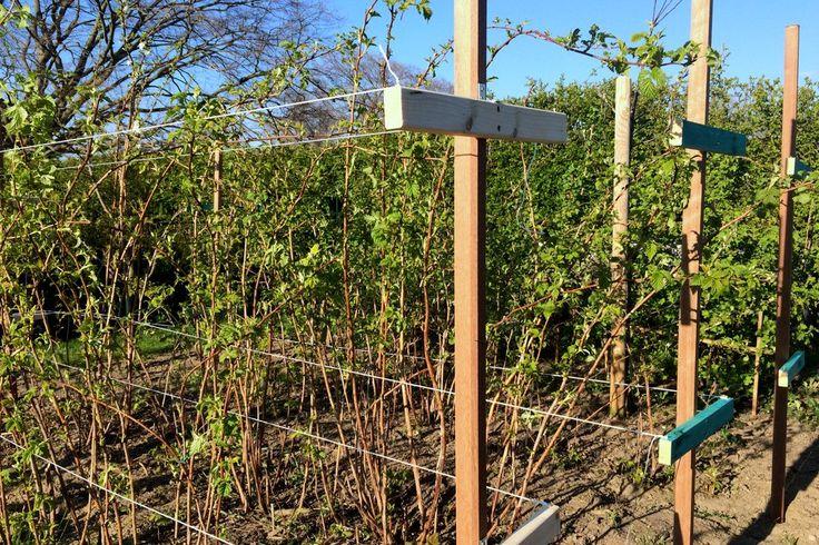 Frühling: Es tut sich was im Ländchenlust-Garten   Neue DIY-Rankhilfen für die Himbeeren