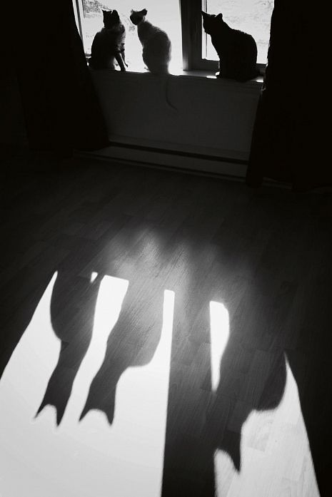 Shadow of these Cats | black and white…