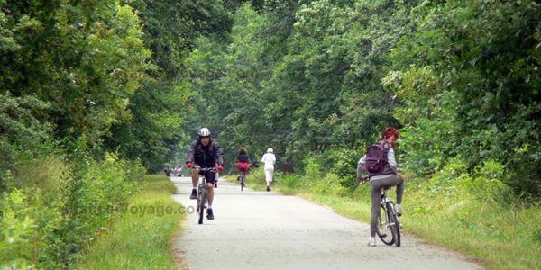 Foresta di Sénart - Tra le più antiche dell'Ile-de-France, la foresta di Sénart vanta una superficie di oltre 3000 ettari, ideali per il trekking e le escursioni in bici.