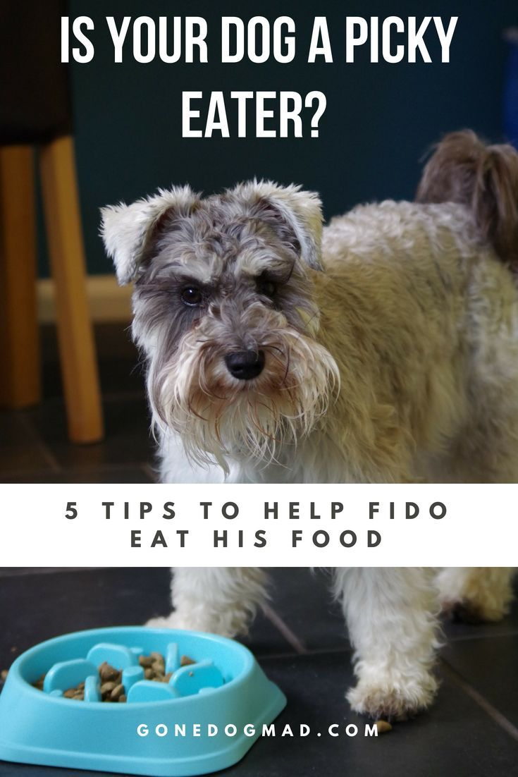 My Dog Won T Eat 5 Top Tips For Picky Eating Dogs My Dog Wont