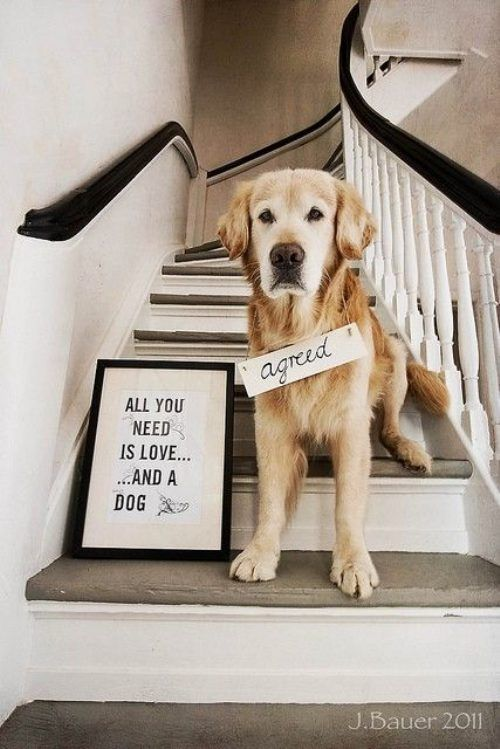 agreed :): Love My Dogs, Best Friends, Pet, Funny Quotes, So True, Funny Animal, True Stories, Dogs Love, Golden Retriever