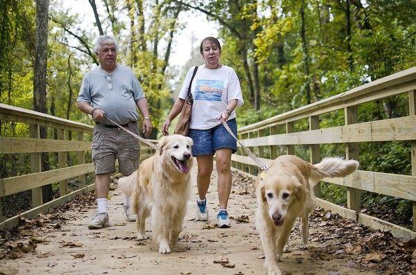 Szabályzat kutya-járás: Kezdjük magad, és a világ szigorodnak