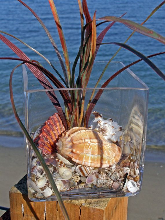 SHELL BEACH DECOR arrangement in glass, coastal decor, nautical decor