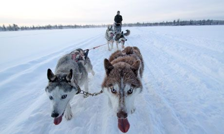 Husky sledding in the Arctic with Dior and Armani    After learning to husky sled in the UK, our writer tackles a hardcore trip that brings him closer to his dogs and fellow sledders – and to a kinder view of the Santa mayhem that is Lapland in late December