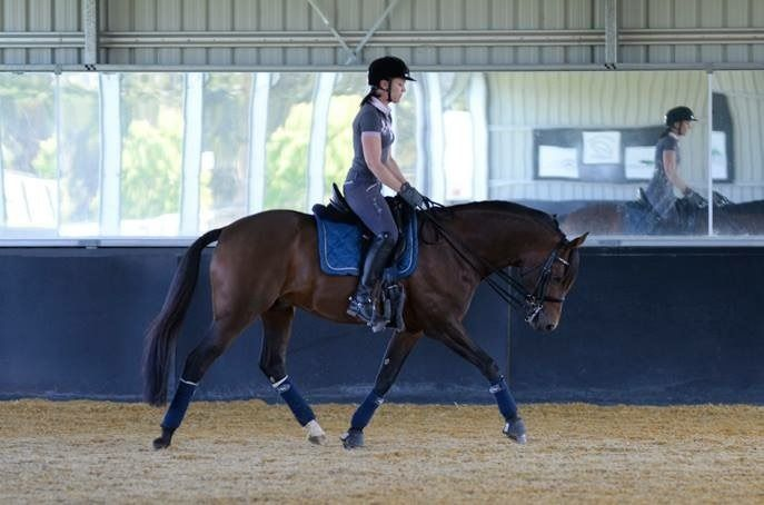 Topline Building Exercises~ Understand the anatomy of your horse's topline, causes of poor muscle and 8 proven exercises to develop your horse's back and core muscles.