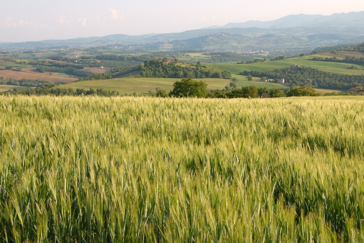Primavera: Grano in Umbria