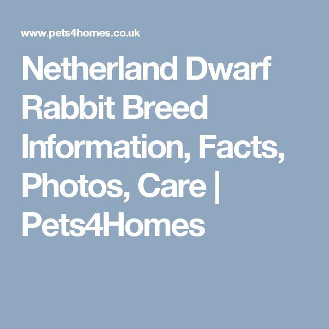 25 Best Ideas About Netherland Dwarf On Pinterest
