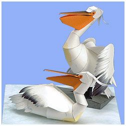 Dalmatian Pelican. Click on link for free printable. http://global.yamaha-motor.com/yamahastyle/entertainment/papercraft/animal-global/pelican/