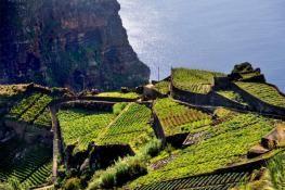Trek à Madère : Machico, Porto da Cruz, les paysages sauvages du Nord et du Centre de l'île (AKAOKA)