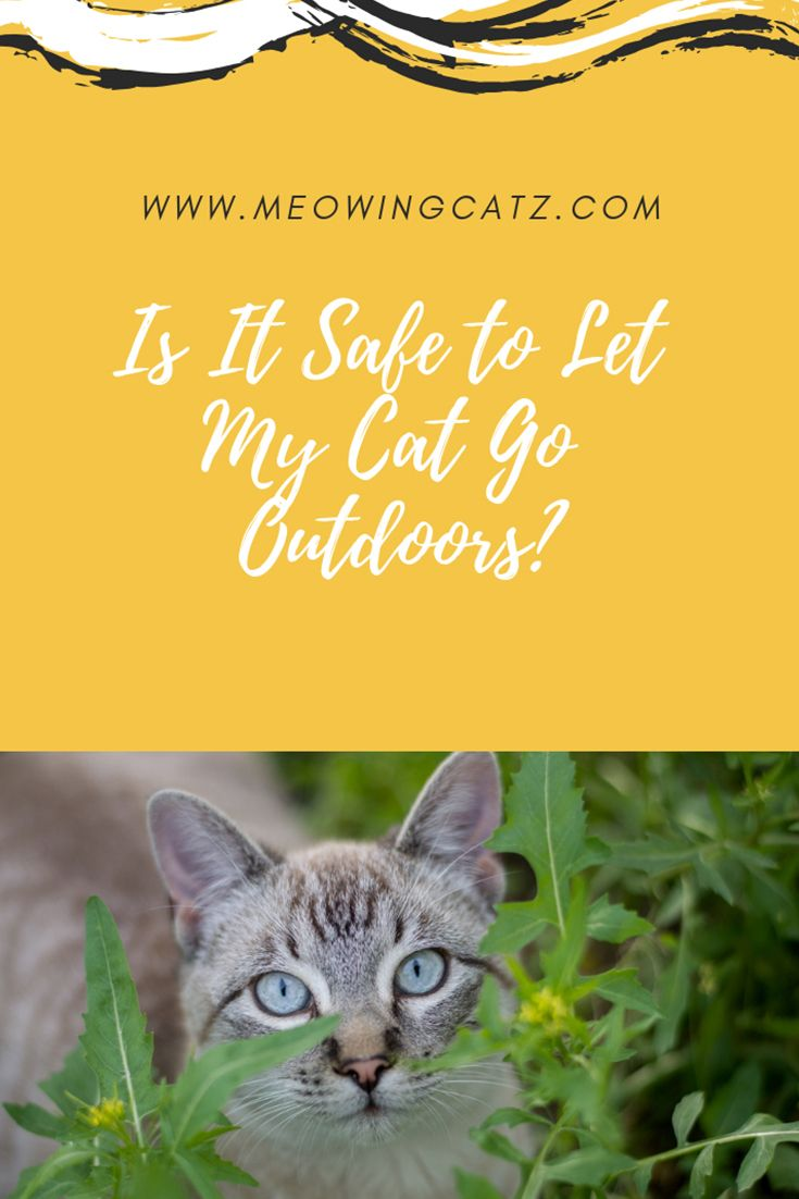 Is It Safe To Let My Cat Go Outdoors Go Outdoors Cats Outdoor Cats