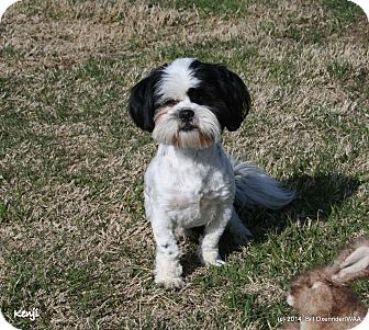 Patterson, CA - Shih Tzu. Meet Kenji adoptable from Westside Animals for Adoption Kenji is a young male Shih Tzu who was found with his 3 siblings - Chan, Pandi and Howie - as strays. This little fellow is a bit shy now but give him time, gentle rubs and a warm lap and he will come out of his shell. If you wish to adopt more than one we will offer discounts on fees.