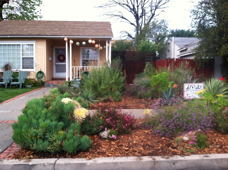 70 best images about drought tolerant front yard on for Drought tolerant yard