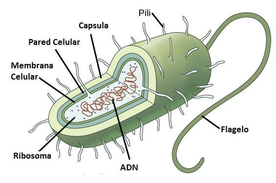 Resultado de imagen de fotos de celulas