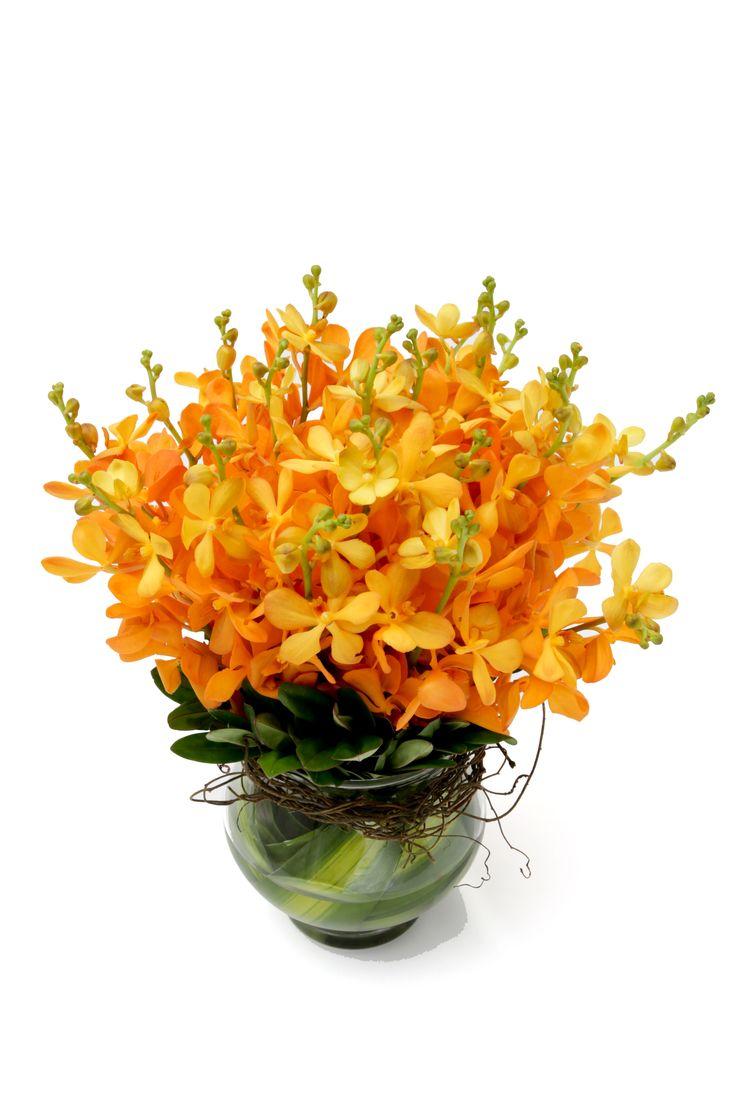 Pumpkin orchids