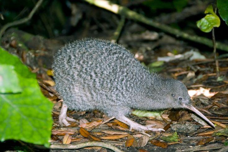 Head to Stewart Island to see some kiwi!