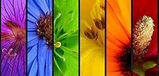 Resultado de imagen para flor amapolas azules