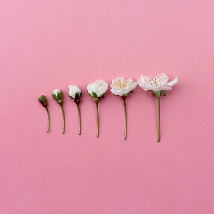 Imgur Com Pink Aesthetic Flower Aesthetic Everything Pink See more ideas about aesthetic wallpapers, aesthetic pastel wallpaper, aesthetic iphone words wallpaper retro wallpaper tumblr wallpaper aesthetic iphone wallpaper wallpaper quotes aesthetic wallpapers iphone wallpaper vans baby wallpaper harry styles wallpaper. pink aesthetic flower aesthetic