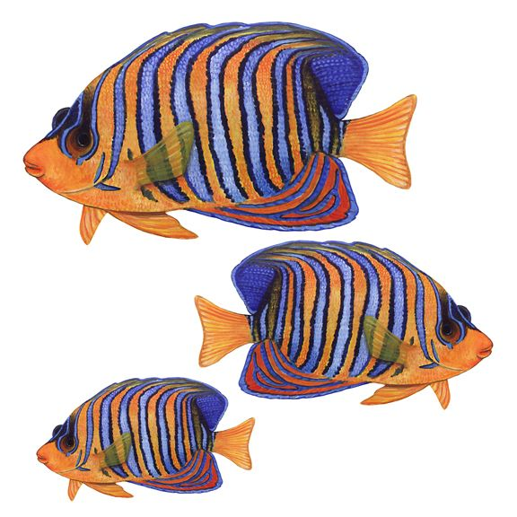 Tropical Fish Wall Decals, Regal Angelfish - Home and Wall Decor