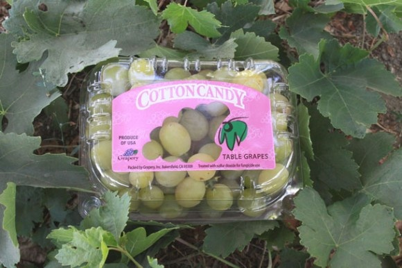 Cotton Candy Grapes from the Grapery | everyone says they really taste like cotton candyCotton Candy, Graperi Introducing, Flavored Grape, Candies Grape, Cotton Candies, Tables Grape, Candies Flavored, Candies Tables, Candies Taste