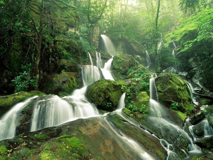 Waterfalls: Forests, Great Smoky Mountain, Natural Photography, Amazing Pictures, Natural Pictures, Beautiful Places, National Parks, Desktop Wallpapers, Branches