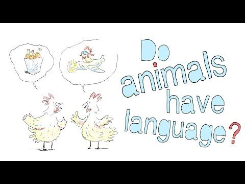 Animals communicate with each other using energy and body ...