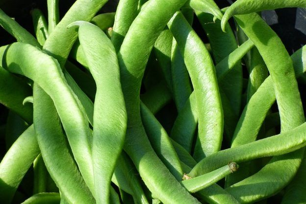 how to save seeds from runner beans