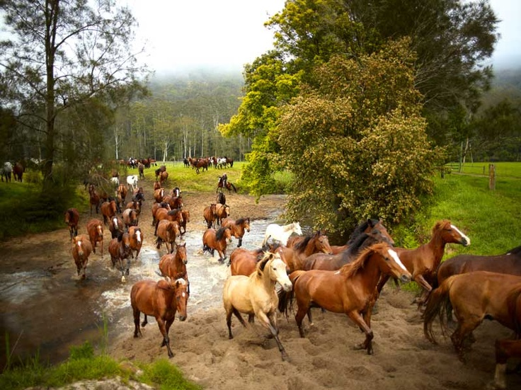 Horse Muster, Glenworth Valley, NSW. Central Coast Hinterland, 65km north-west of Sydney, at Glenworth Valley Horse Riding, 69 Cooks Road, Peats Ridge