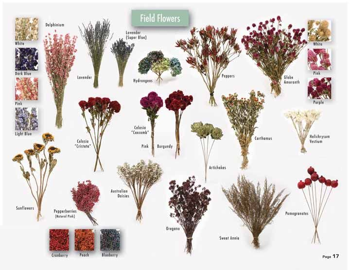 dried flowers easily grown from seed for  1 00