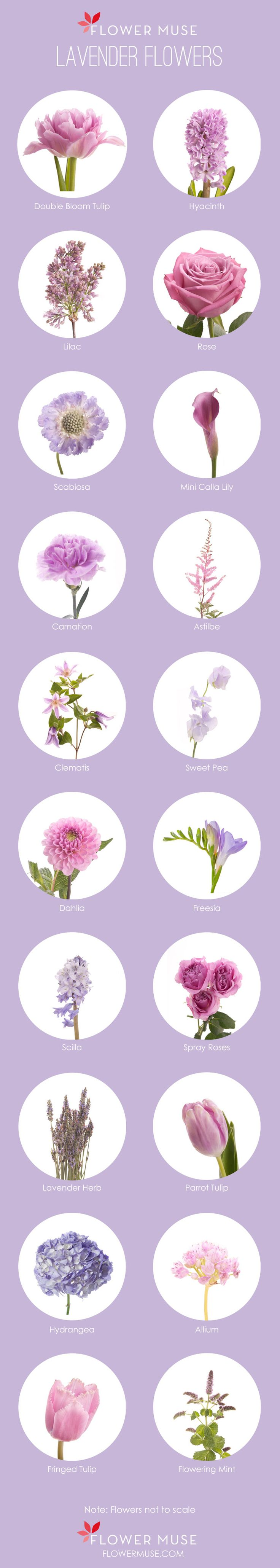 Our Favorite: Lavender Flowers. See more on Flower Muse Blog: http://www.flowermuse.com/blog/favorite-lavender-flowers/