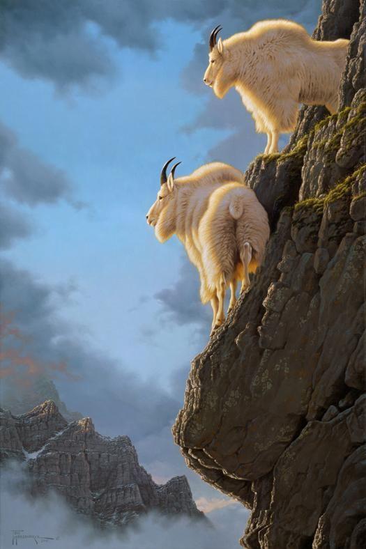 Rocky Mountain goats ~ Precarious Position by Tom Mansanarez