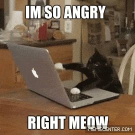 Image result for cat typing on laptop gif