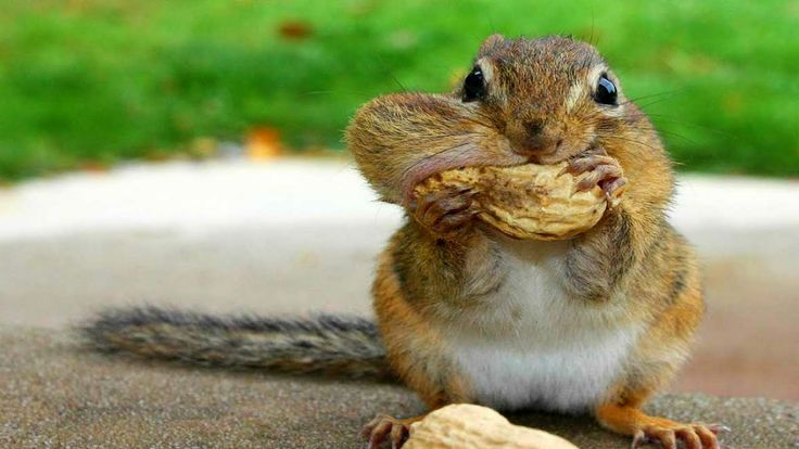 10 Funniest Squirrel Videos  Love this! Serves them right, for trying to steal Birds food!!!!!!