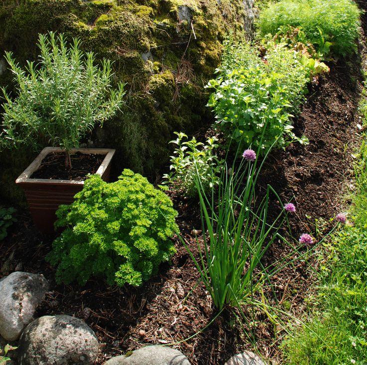 Ti enkle grønnsaker og urter — Hageselskapets kjøkkenhage