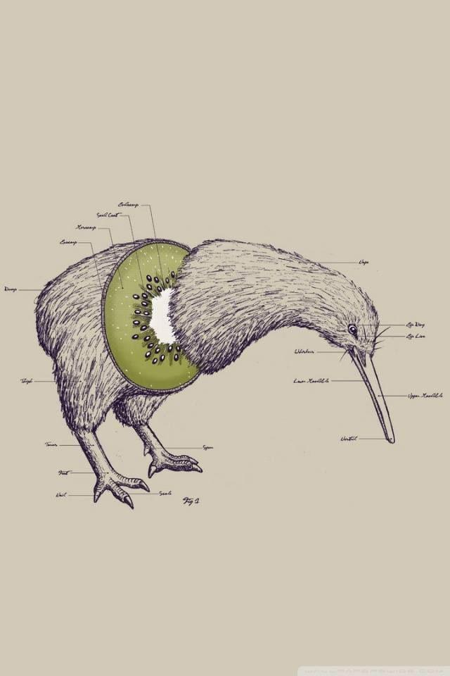 Kiwi Bird Fruit Funny pun   LOLZ   Pinterest   Funny ...