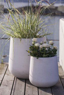 Skandinavisk formspråk på potten og nøytrale farger på plantene.
