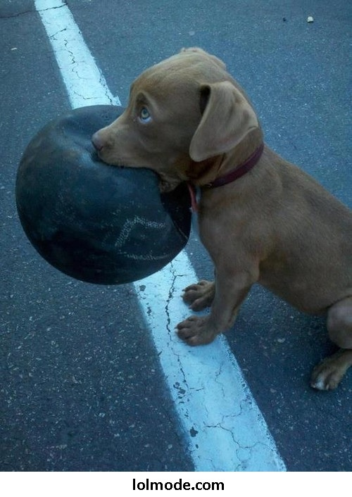 omg I don't care who you are, if a puppy walked up to you like this you would throw that ball for him!