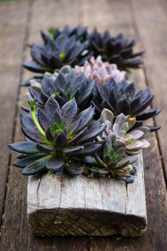 Add some dark succulents to your planters for an unexpected pop of color from the surrounding lighter colors