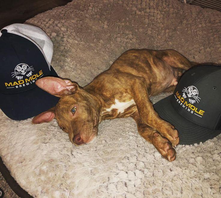 Puppy rescue wilmington nc