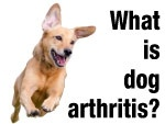 What is Dog Arthritis?  How do the joints in dogs work?  What can I give my dog for it?