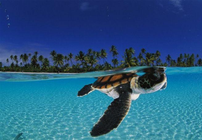 David Doubilet, fotógrafo e mergulhador, vai às profundezes do oceano para clicar exemplares de animais e plantas submarinos