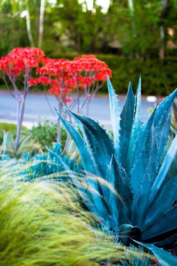 Pflanzen mit verschiedener Färbung und Textur