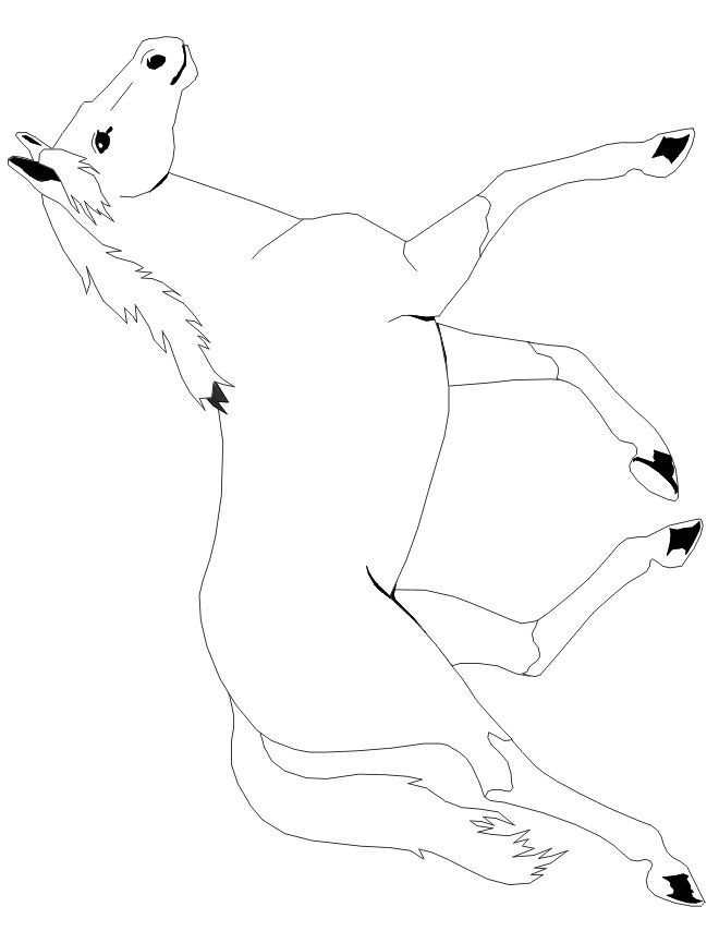 Kentucky Derby Horse Coloring Pages
