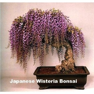I want this so bad! Wisteria smells like heaven itself. <3