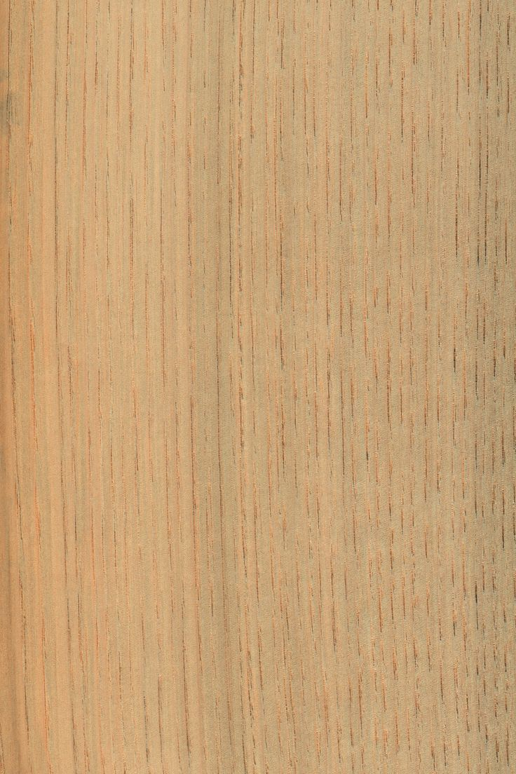 Kastanie | Furnier: Holzart, Kastanie, Blatt, hell, gräulich, grau, Laubholz, braun #Holzarten #Furniere #Holz